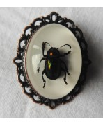 Cabinet of curiosities Beetle Brooch, Taxidermy, Scarab, Mori, Gothic wedding, Insect, Witch, Nature, Victorian, Steampunk